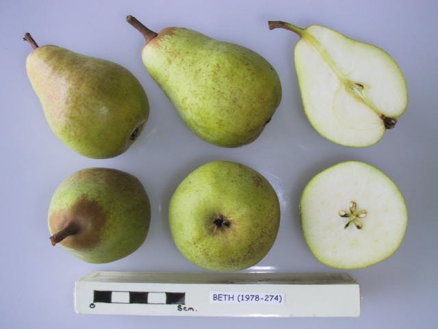 Buy Beth pear trees online – Nationwide Delivery - Heritage
