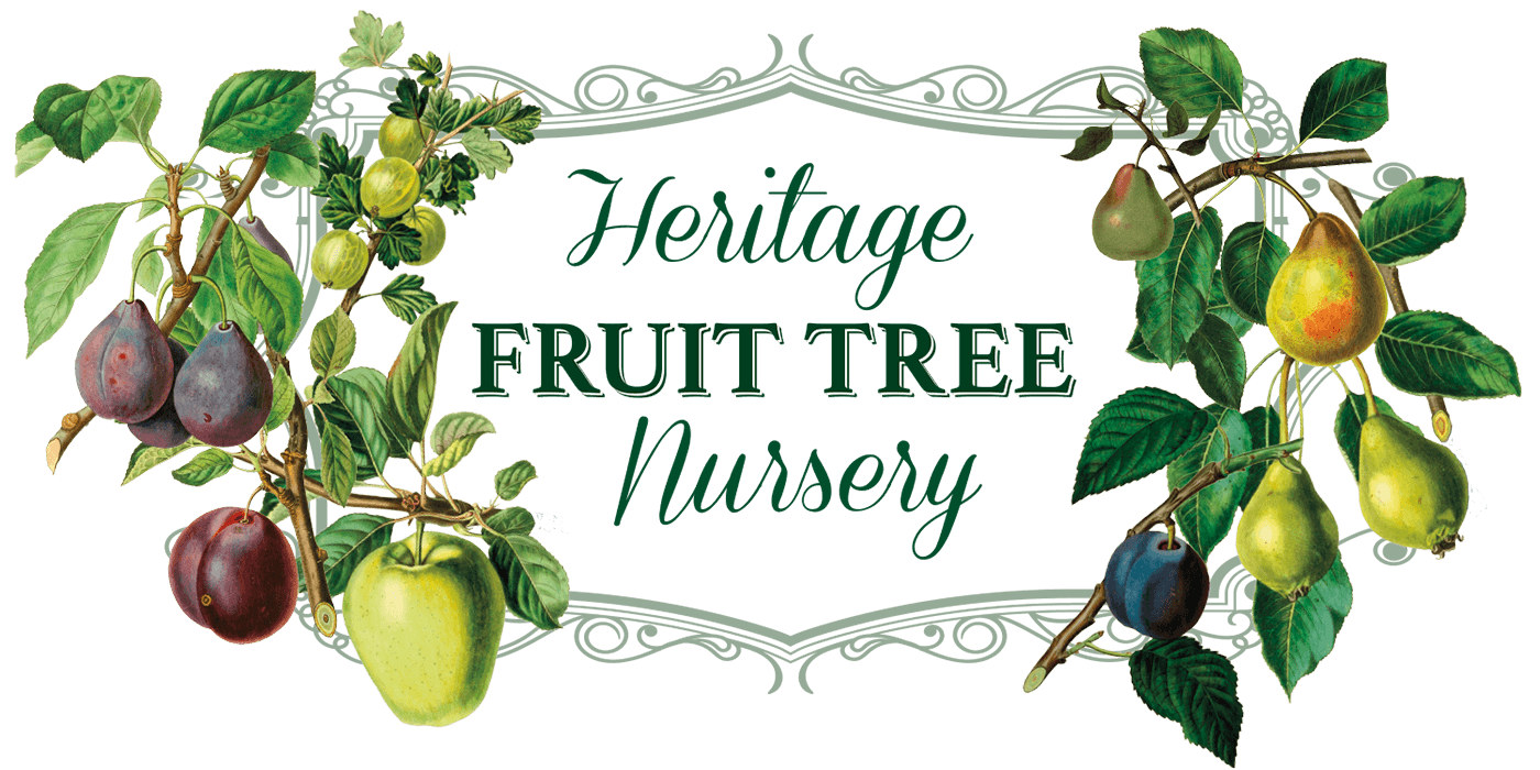Heritage Fruit Tree Nursery Logo