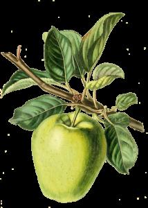 heritage apple trees